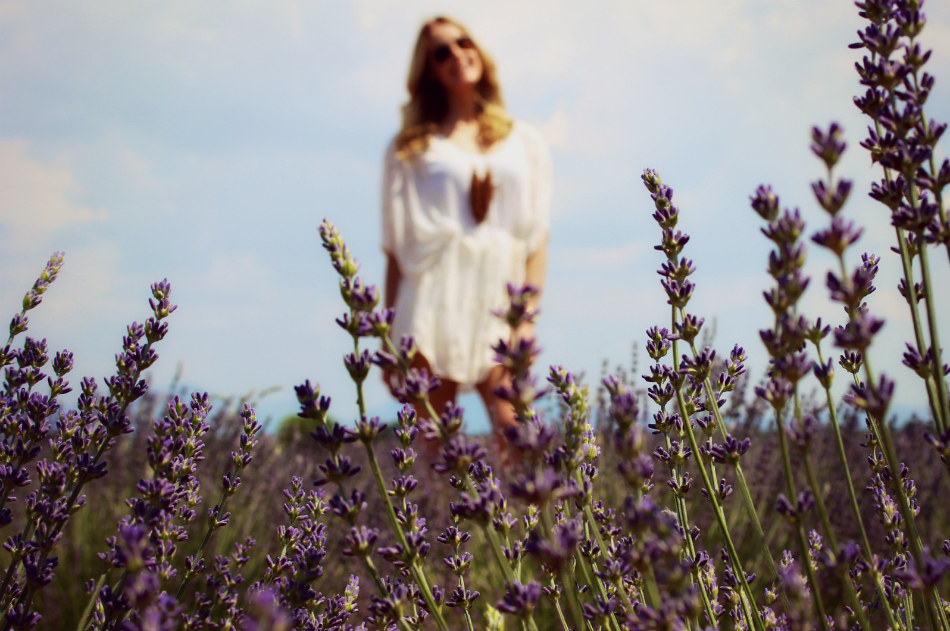 Lavender fields forever - Pic 3, smaller
