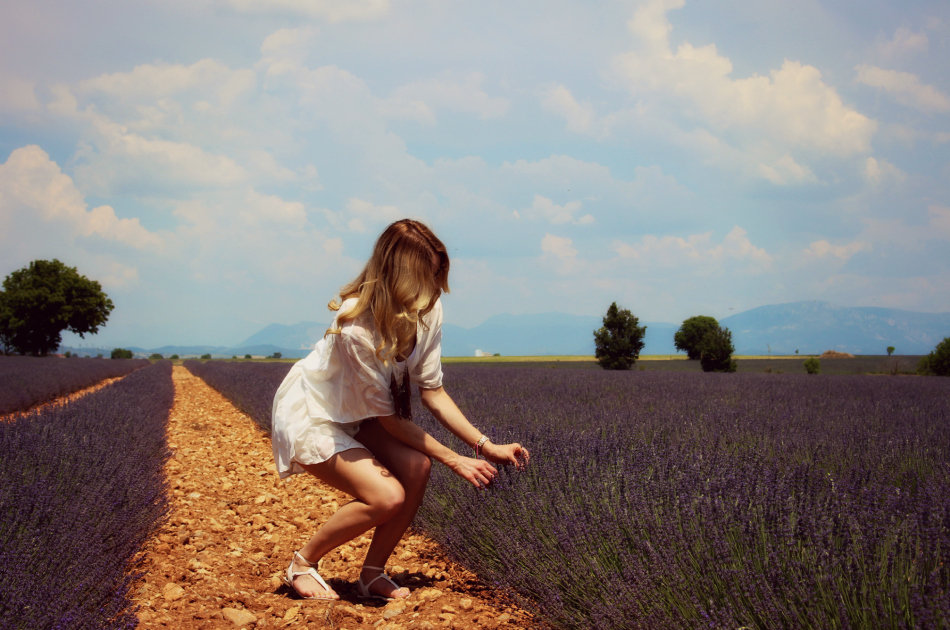 Lavender fields forever - Pic 4, smaller