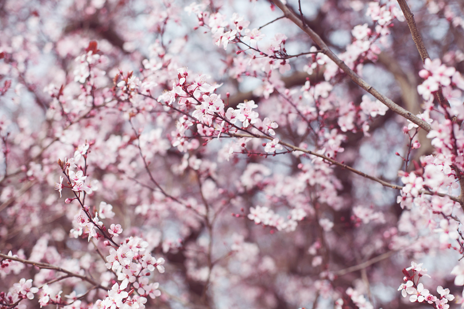 Garypeppergirl - Light pink flowers
