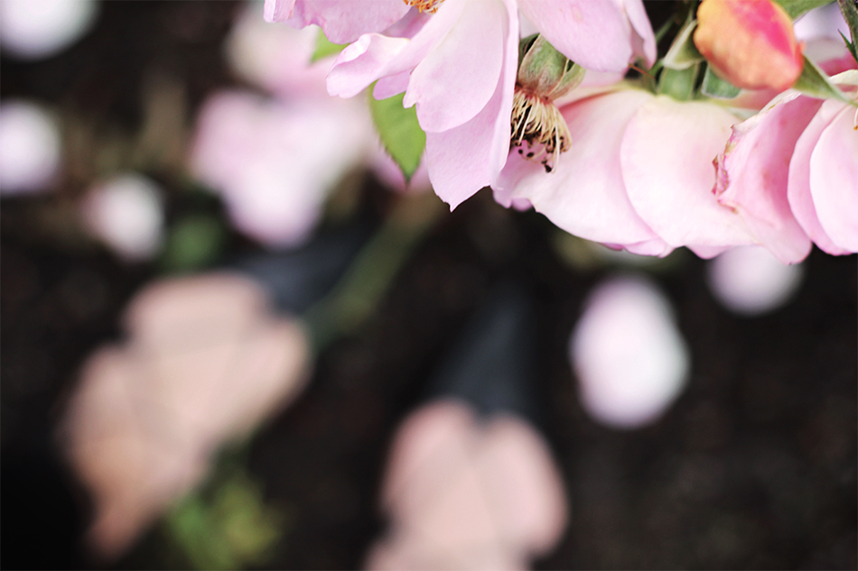 Rose Garden - Pic 6